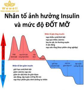 yếu tố insulin trong giảm cân